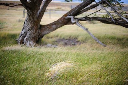 Windblown Grass