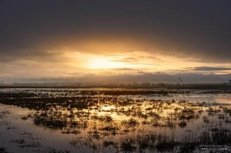 Sunrise on Baskett Slough National Wildlife Refuge in Oregon.
